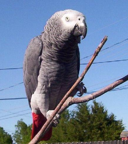 My parrot Rufus looks great against the beautiful Oklahoma blue sky